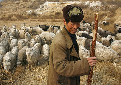 Horny Goat Weed Origin